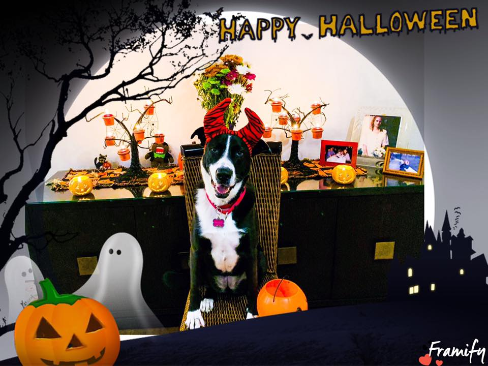 lucy the dog with a halloween headband with a halloween background with pumpkins ghosts and candles that says happy halloween
