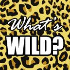 What_s Wild word art