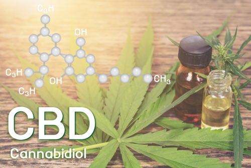 Cbd oil_ Cannabis of the formula CBD.