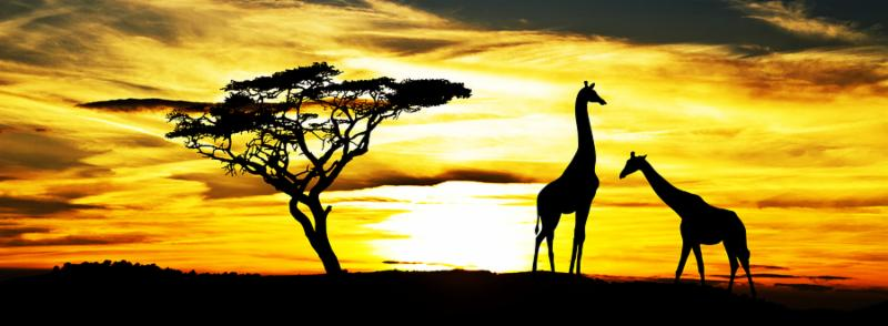 wild animals in africa