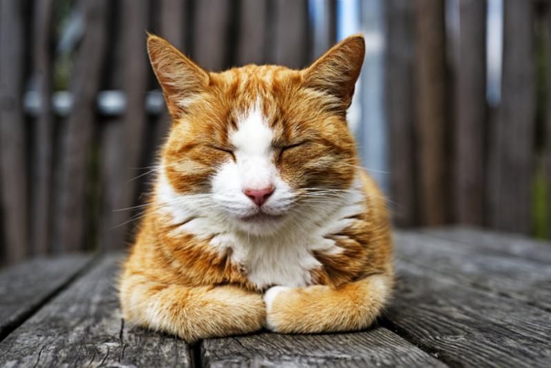 closeup_sleeping_cat.jpg