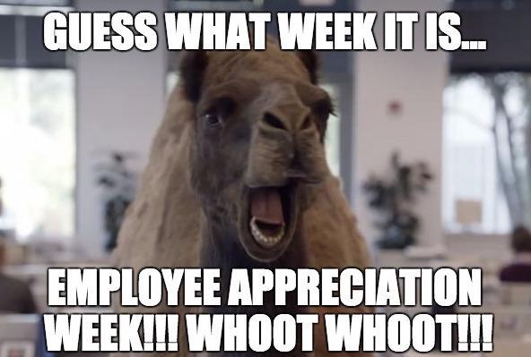 Funny Appreciation Meme : It s employee appreciation week at central office