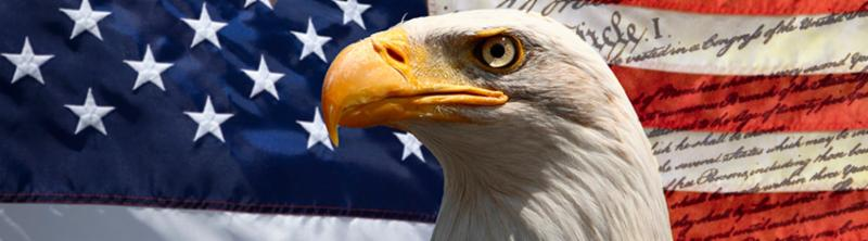 Bald eagle in front of flag