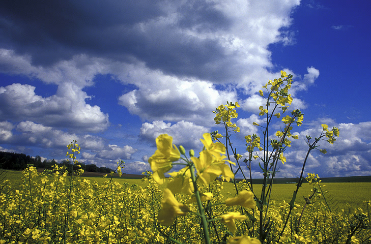 field_yellow_flowers.jpg