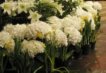 Easter Flowers by Millard Cook