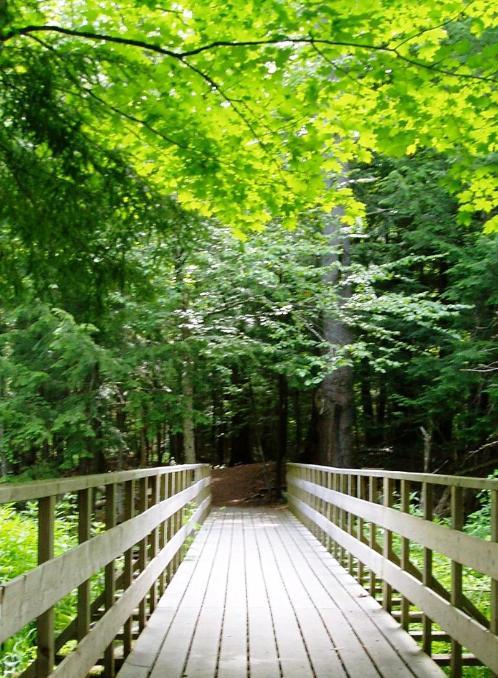 Grant's Woods