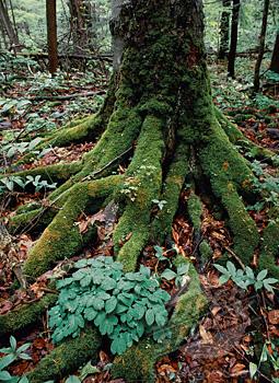 Tree Condo Photo