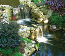 Water Fall, Pond, Planting