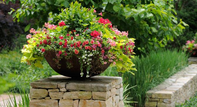 Flowers in Pot on Wall Pillar