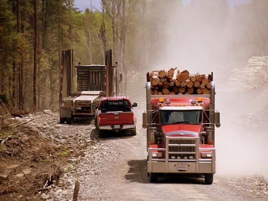 Pick-up driving between two logging trucks