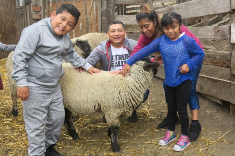 Family with sheep