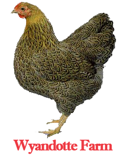 Wyandotte Farm