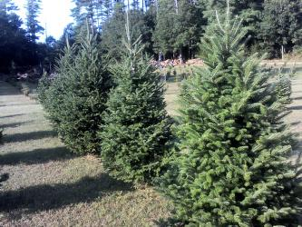 Fieldstone Acres Christmas Trees
