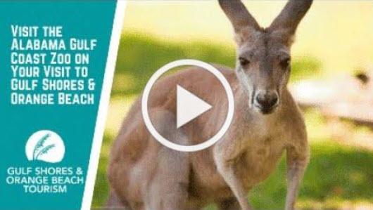 zoo video.jpg