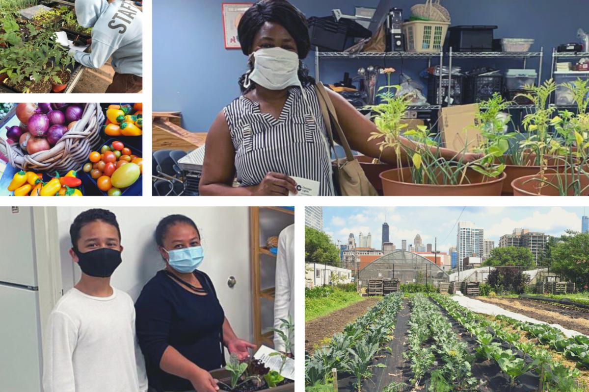 Urban Farm Summer Collage 2020