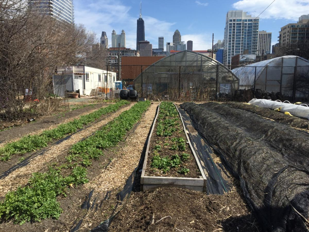urban farm city view