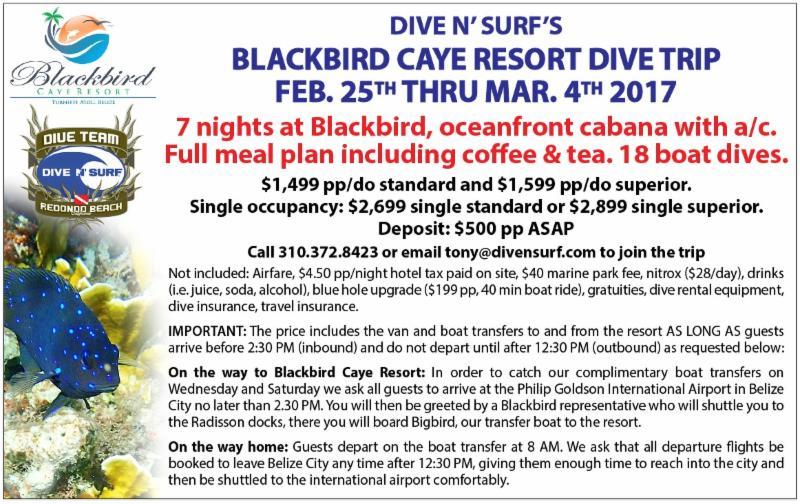 Dive N' Surf Dive Team News Letter Update!