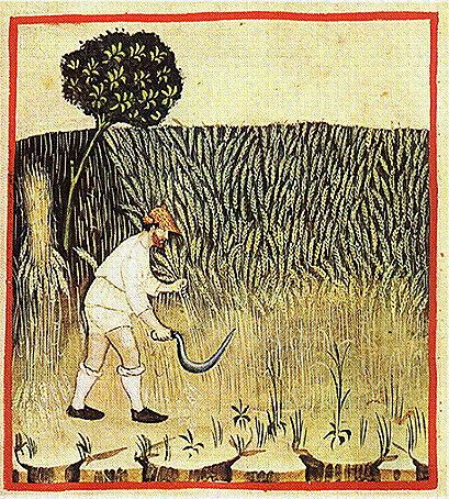 parable of sowing weeds