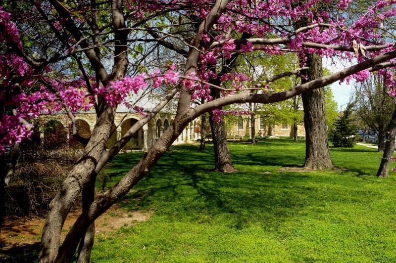 Trinity Spring