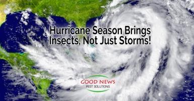 Hurricane Season Brings Insects