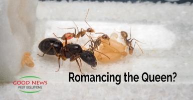 Romancing the Queen