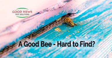 A Good Bee