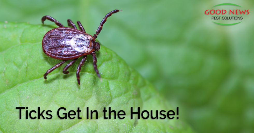 Ticks get in the house