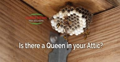 Is there a queen in your attic?