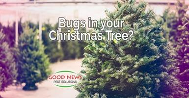 bugs in your christmas tree