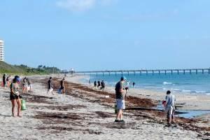 coastal clean up