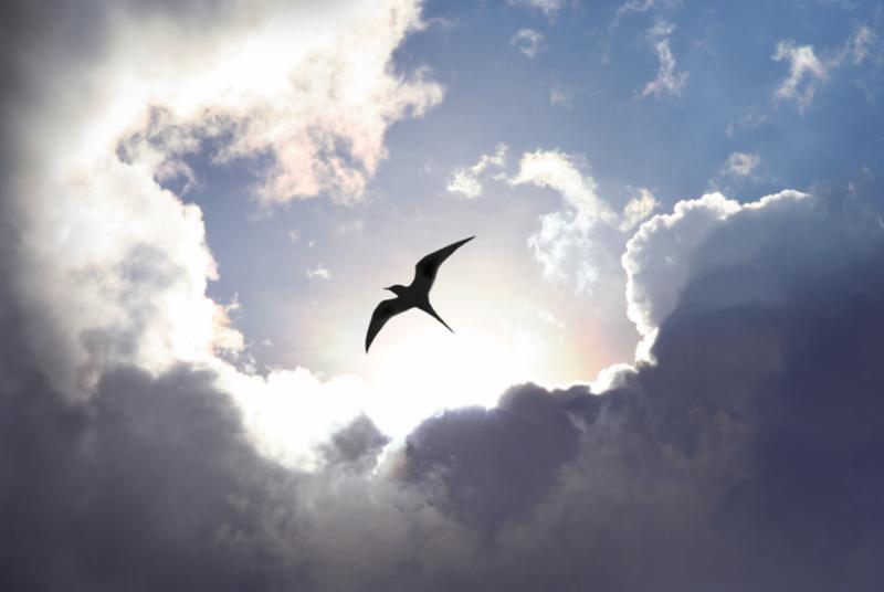 fly_to_heaven.jpg