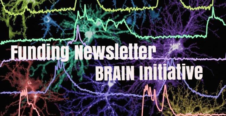 BRAIN Initiative Funding Newsletter: NSF Understanding