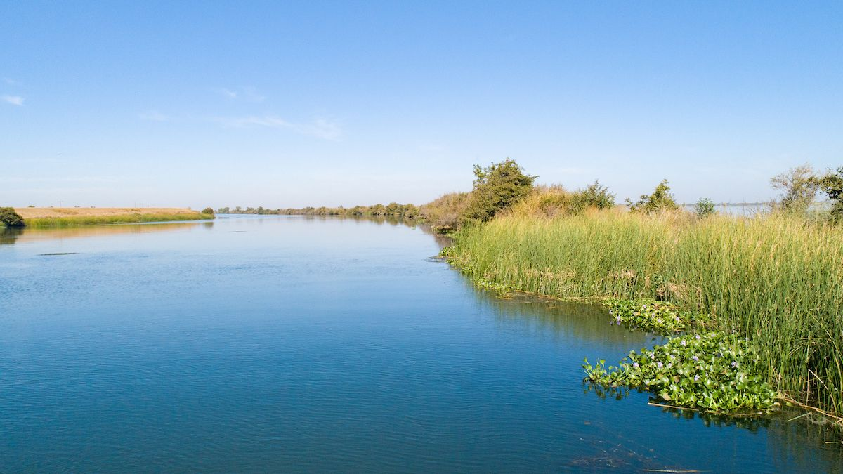 ule grows in the habitat surrounding the future location of the Lookout Slough Tidal Restoration Project
