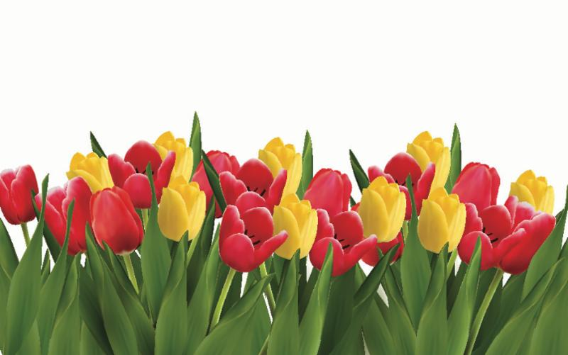 red_yellow_tulips.jpg