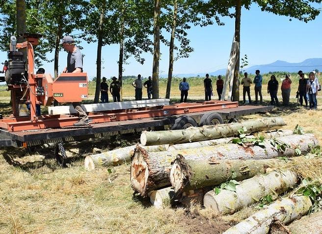 Poplar harvesting workshop