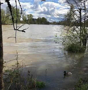 Unusually high Willamette River