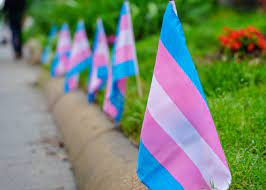photo of small transgender pride flags lining a lawn