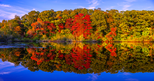 Panoramic stunning photo of fall foliage reflected on a lake with a glas...