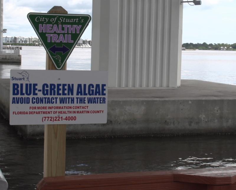 blue green algae sign