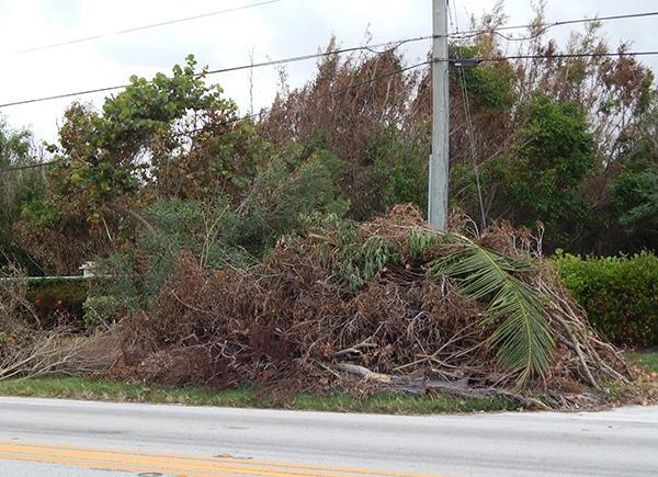 tree debris pile Irma