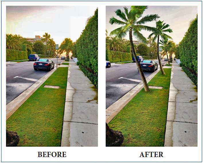 Before and after palm trees