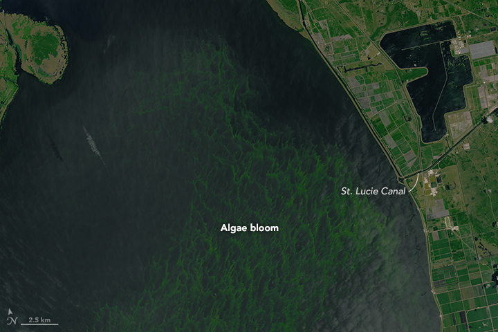 Okeechobee Algae Bloom