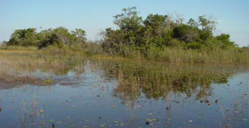 Everglades tree island