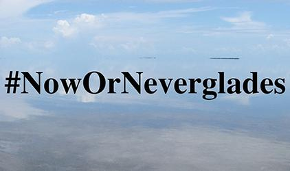 Now or Neverglades