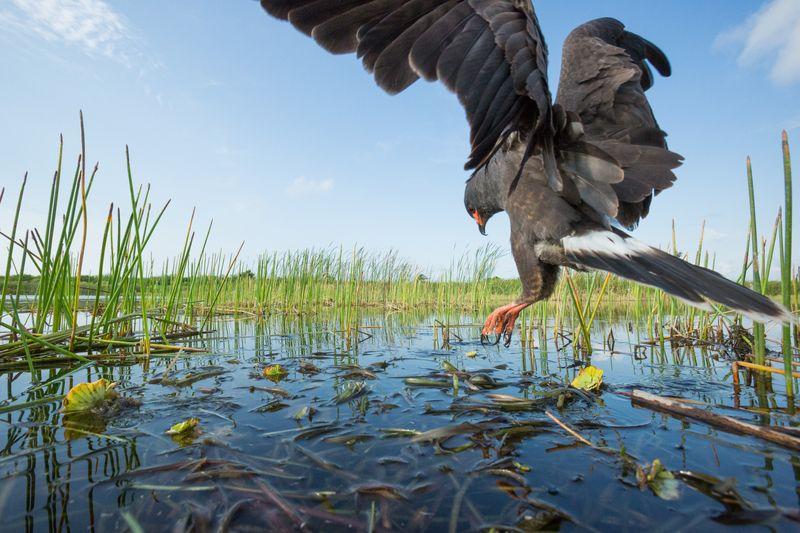 Mac Stone via Everglades Foundation