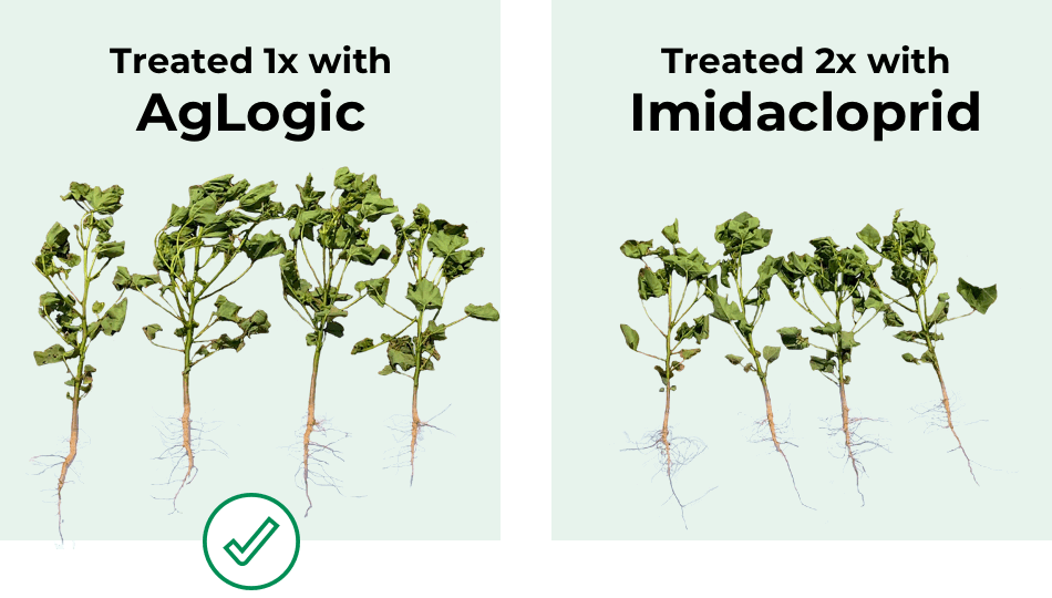 Treated 1x with AgLogic vs Treated 2x with Imidacloprid