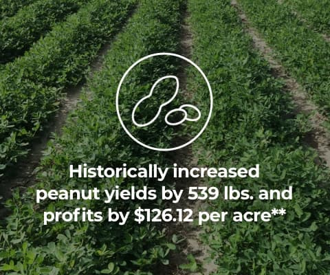 Historically increased peanut yields by 539 lbs. and profits by $126.12 per acre**