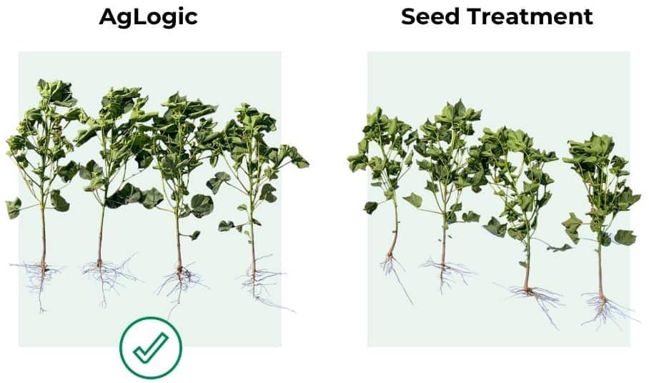 AgLogic vs Seed Treatment