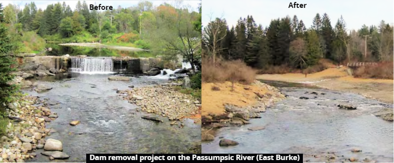 Dam removal project on the Passumpsic River in East Burke