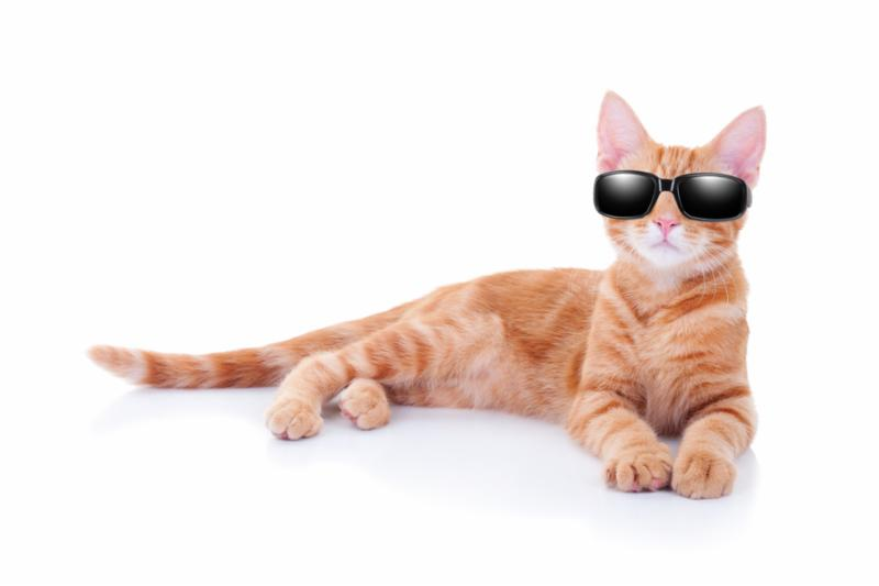 sunglasses_cat.jpg